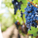 Soluciones de impresión para  el sector vitivinícola