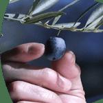 Soluciones RFID Sector del Aceite de Oliva